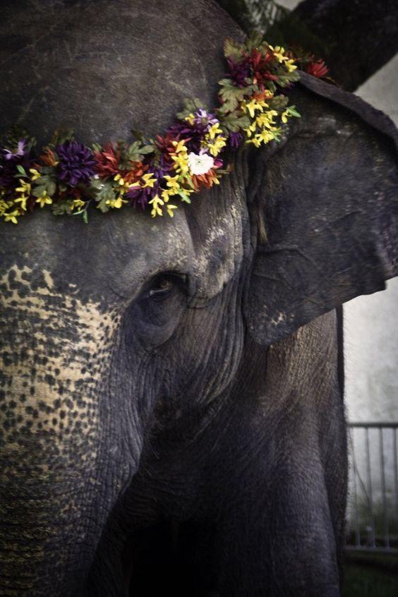 fa842-elephant