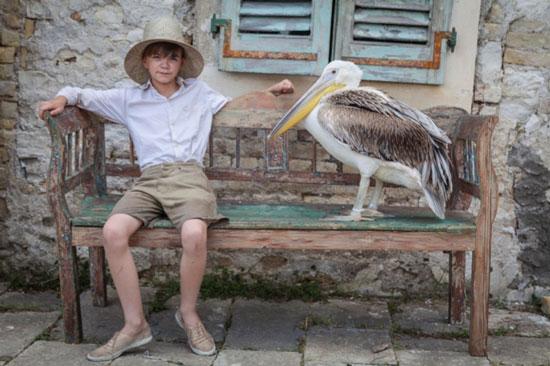 The-Durrells-pelican